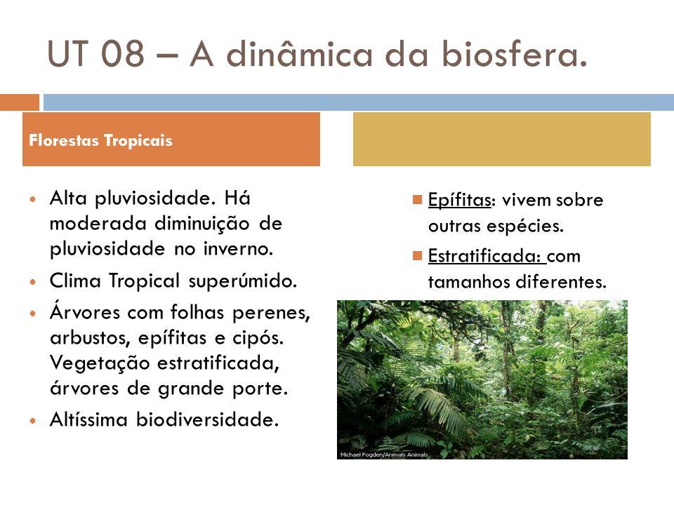 Florestas Tropicais Alta pluviosidade. Há moderada diminuição de pluviosidade no inverno. Clima Tropical superúmido. Árvores com folhas perenes, arbus