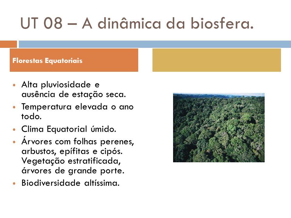 Florestas Equatoriais Alta pluviosidade e ausência de estação seca. Temperatura elevada o ano todo. Clima Equatorial úmido. Árvores com folhas perenes