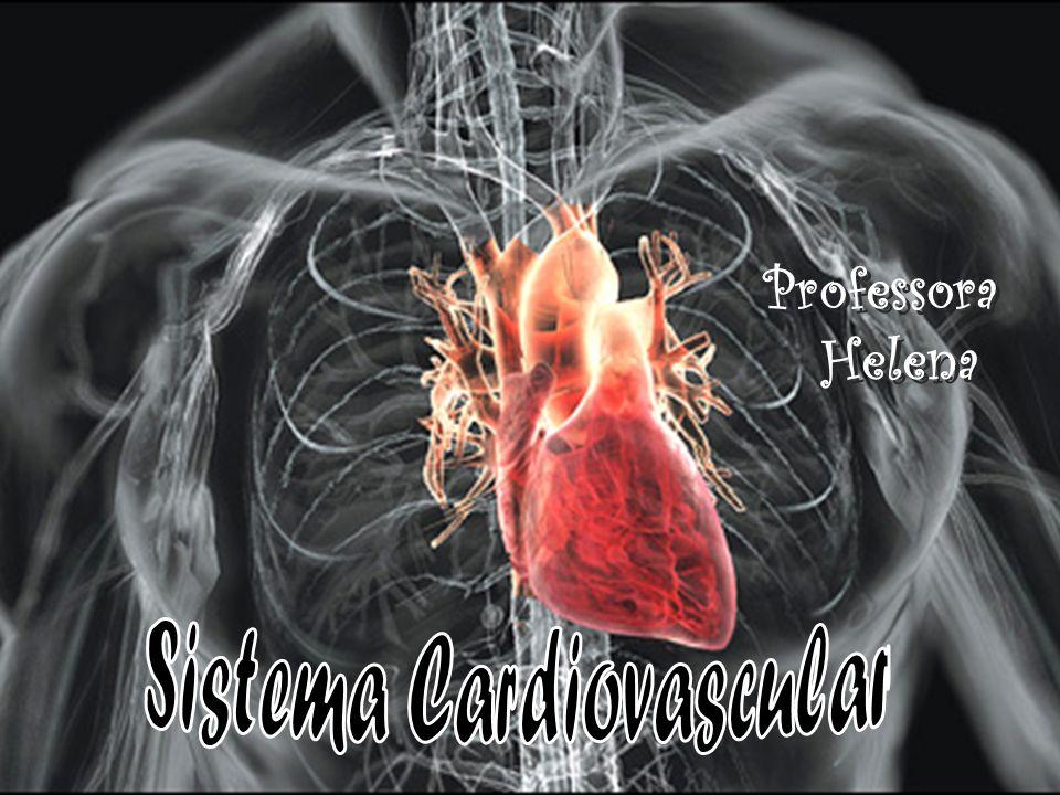 O sangue não oxigenado vem de todas as partes do corpo para o lado direito do coração.