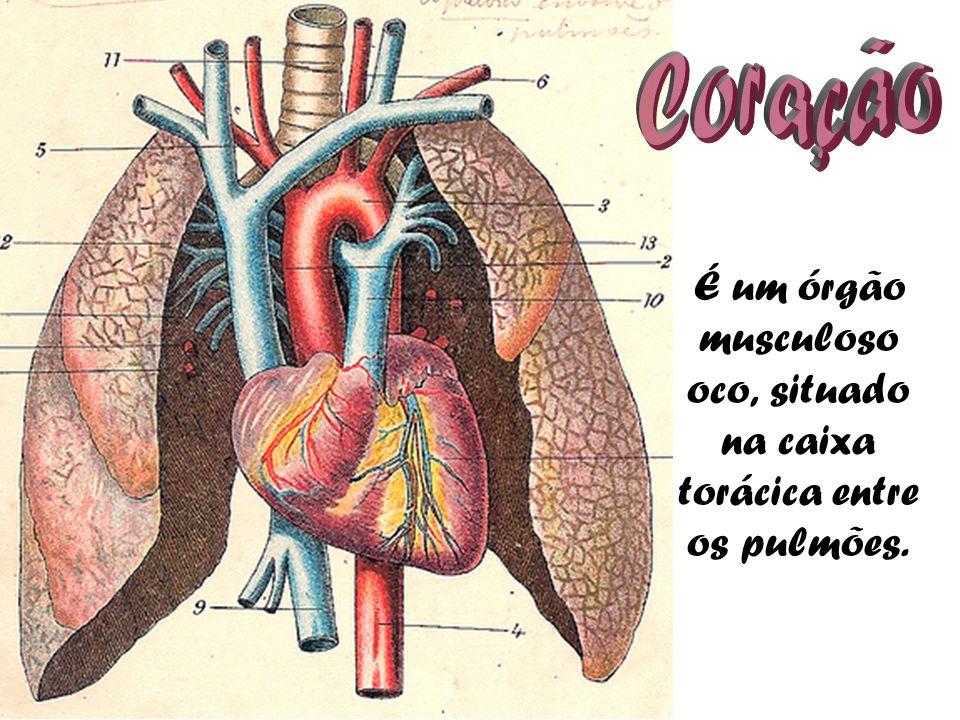 É um órgão musculoso oco, situado na caixa torácica entre os pulmões.