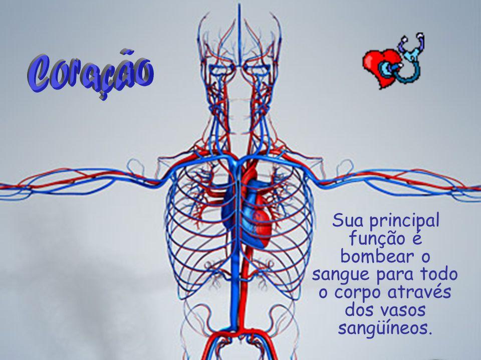 Sua principal função é bombear o sangue para todo o corpo através dos vasos sangüíneos.
