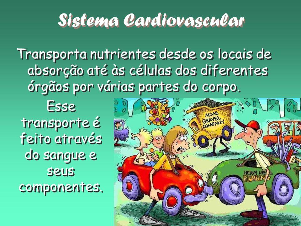 Transporta nutrientes desde os locais de absorção até às células dos diferentes órgãos por várias partes do corpo. Sistema Cardiovascular Esse transpo