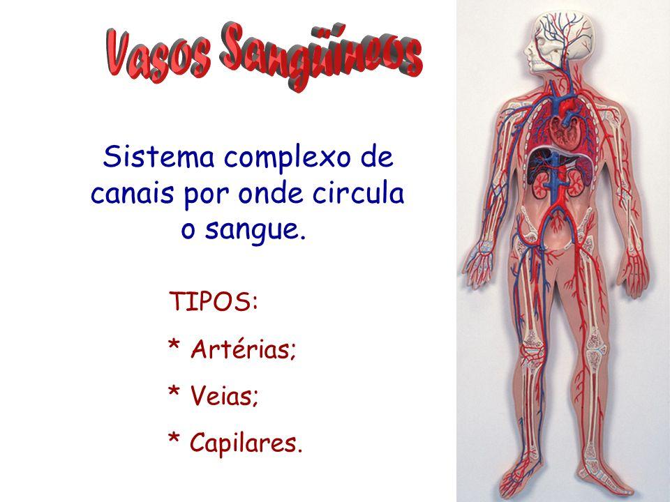 Sistema complexo de canais por onde circula o sangue. TIPOS: * Artérias; * Veias; * Capilares.
