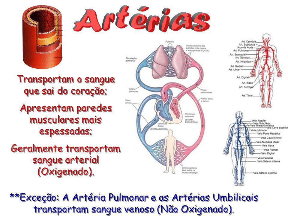 Transportam o sangue que sai do coração; Apresentam paredes musculares mais espessadas; Geralmente transportam sangue arterial (Oxigenado). Transporta