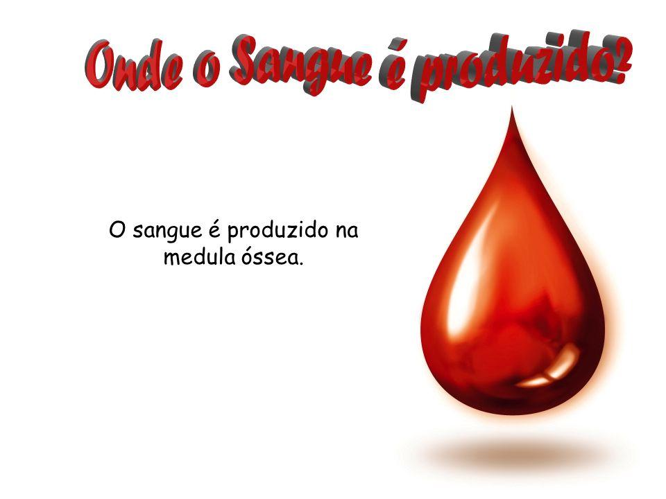 O sangue é produzido na medula óssea.