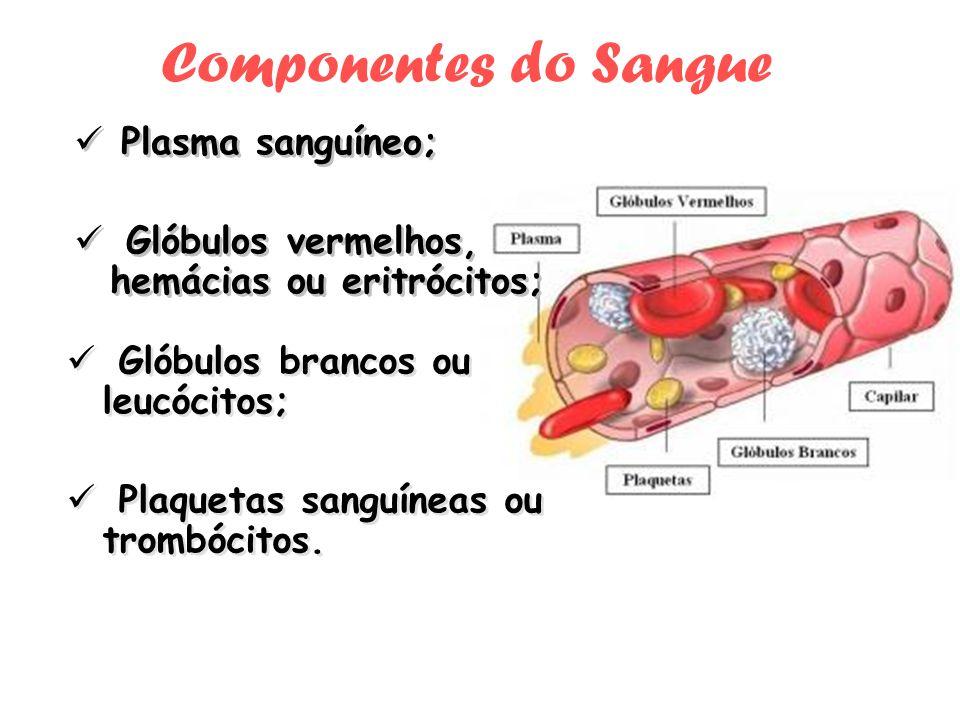 Componentes do Sangue Glóbulos brancos ou leucócitos; Plaquetas sanguíneas ou trombócitos. Glóbulos brancos ou leucócitos; Plaquetas sanguíneas ou tro