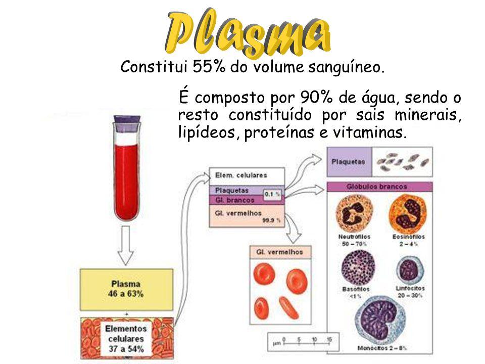 Constitui 55% do volume sanguíneo. É composto por 90% de água, sendo o resto constituído por sais minerais, lipídeos, proteínas e vitaminas.