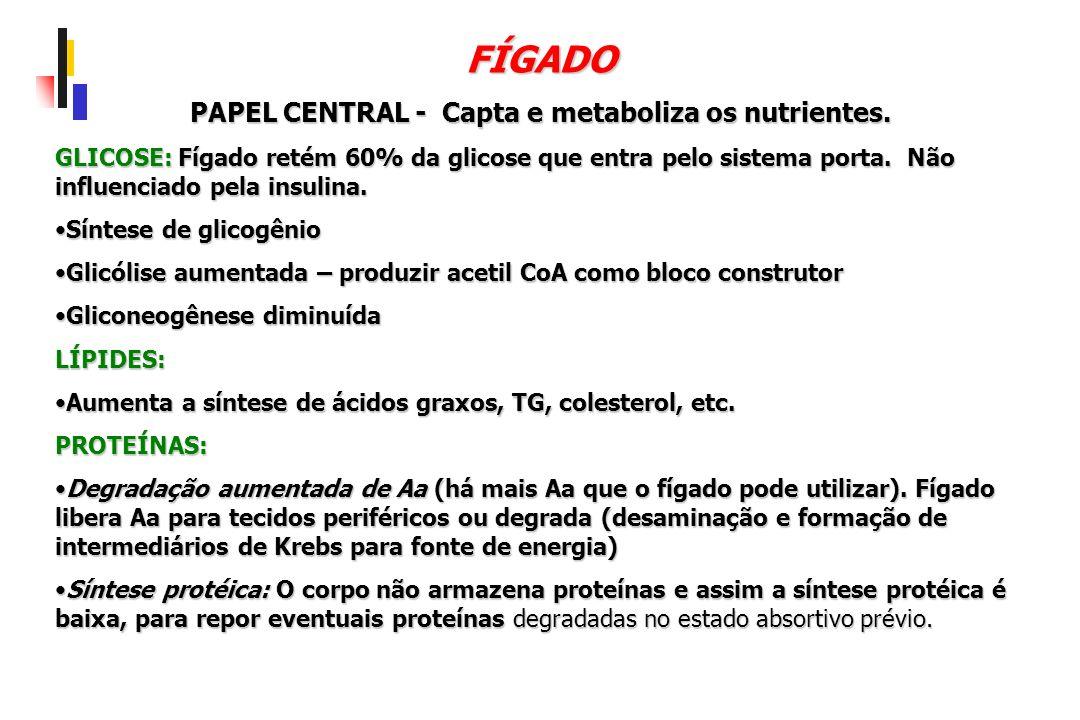 FÍGADO PAPEL CENTRAL - Capta e metaboliza os nutrientes. GLICOSE: Fígado retém 60% da glicose que entra pelo sistema porta. Não influenciado pela insu