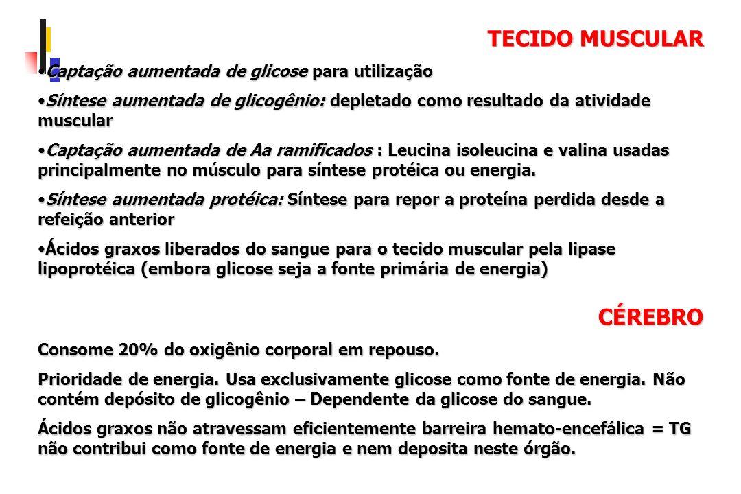 TECIDO MUSCULAR Captação aumentada de glicose para utilizaçãoCaptação aumentada de glicose para utilização Síntese aumentada de glicogênio: depletado