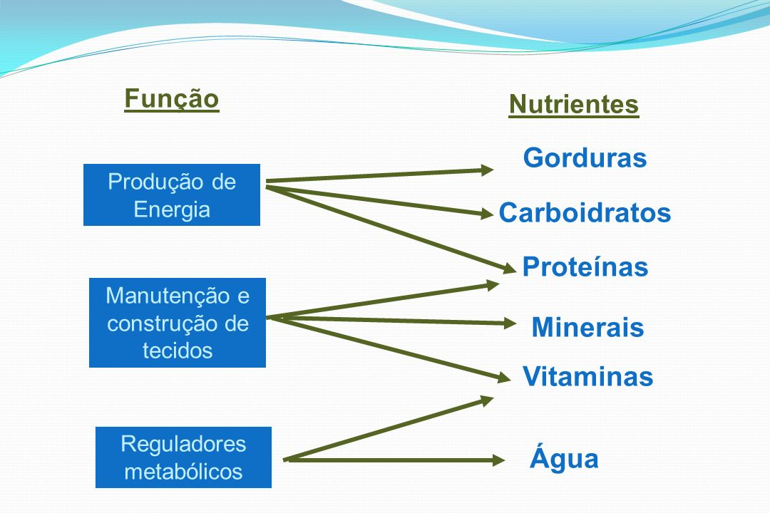 Produção de Energia Manutenção e construção de tecidos Reguladores metabólicos Função Nutrientes Gorduras Carboidratos Proteínas Minerais Vitaminas Ág