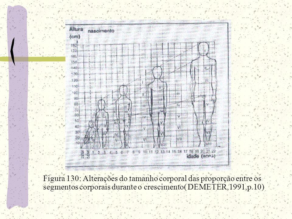 Figura 130: Alterações do tamanho corporal das proporção entre os segmentos corporais durante o crescimento( DEMETER,1991,p.10)