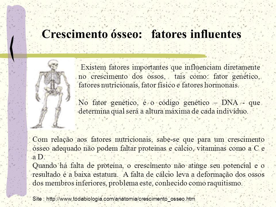 Crescimento ósseo: fatores influentes Existem fatores importantes que influenciam diretamente no crescimento dos ossos, tais como: fator genético, fat