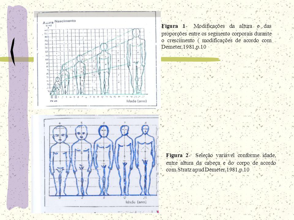 Figura 1- Modificações da altura e das proporções entre os segmento corporais durante o crescimento ( modificações de acordo com Demeter,1981,p.10 Figura 2- Seleção variável conforme idade, entre altura da cabeça e do corpo de acordo com.Stratz apud Demeter,1981,p.10