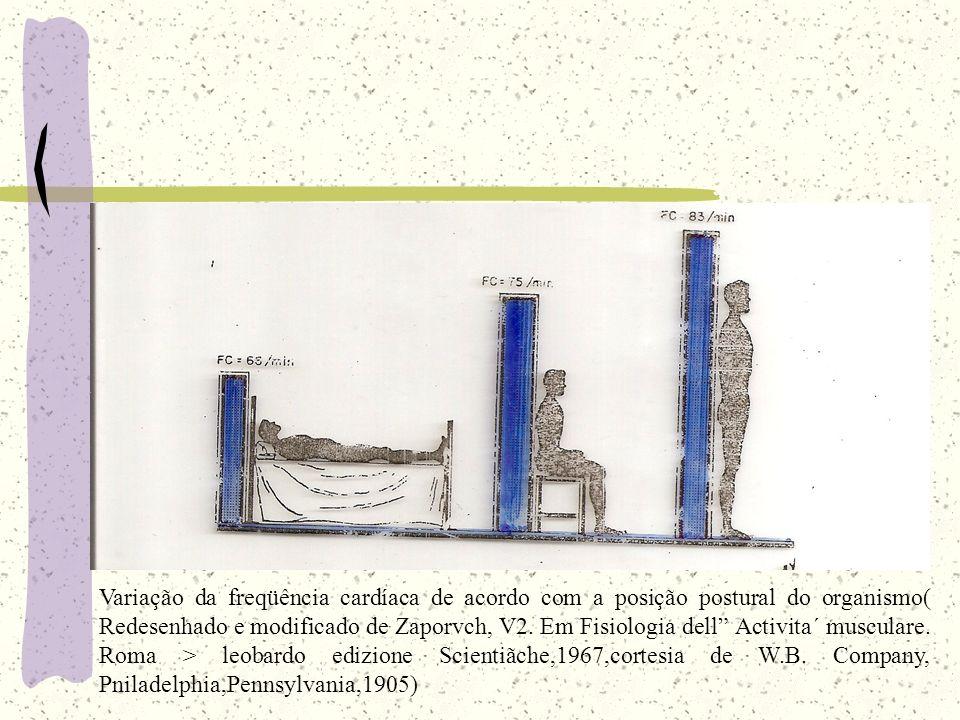 Variação da freqüência cardíaca de acordo com a posição postural do organismo( Redesenhado e modificado de Zaporvch, V2. Em Fisiologia dell Activita´