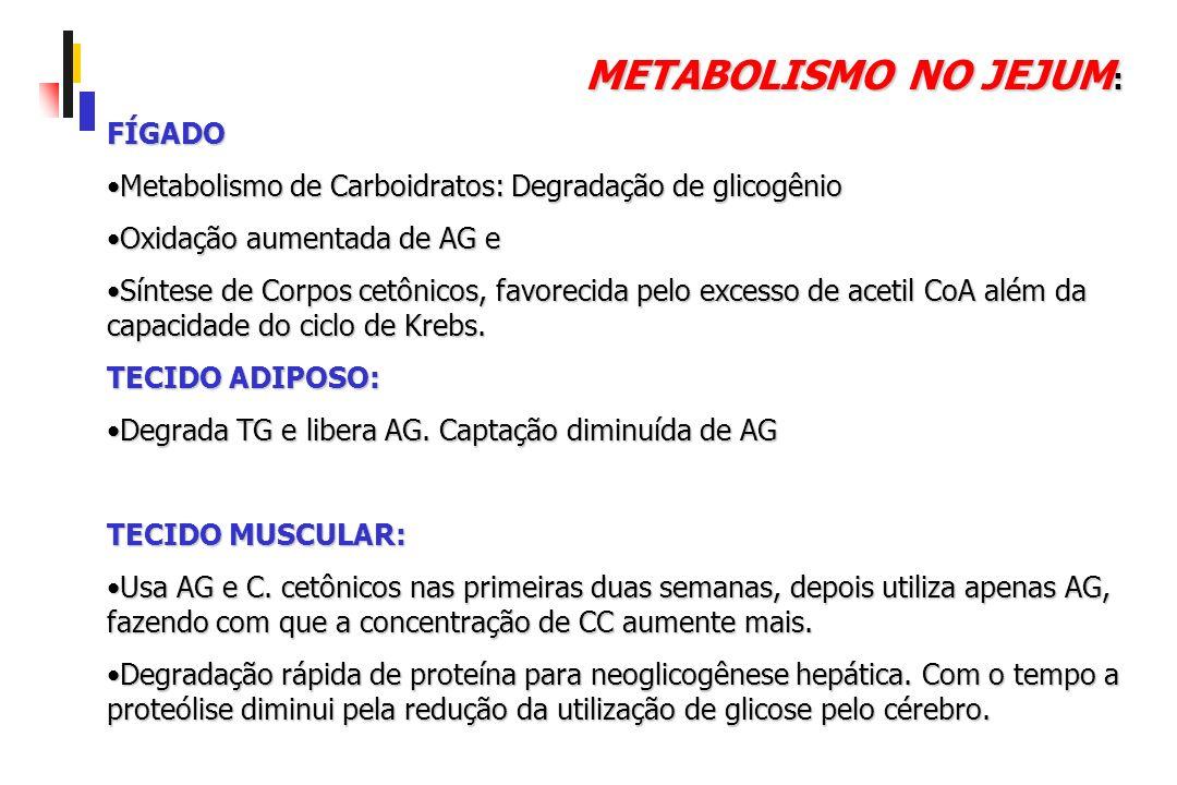 METABOLISMO NO JEJUM : FÍGADO Metabolismo de Carboidratos: Degradação de glicogênioMetabolismo de Carboidratos: Degradação de glicogênio Oxidação aume