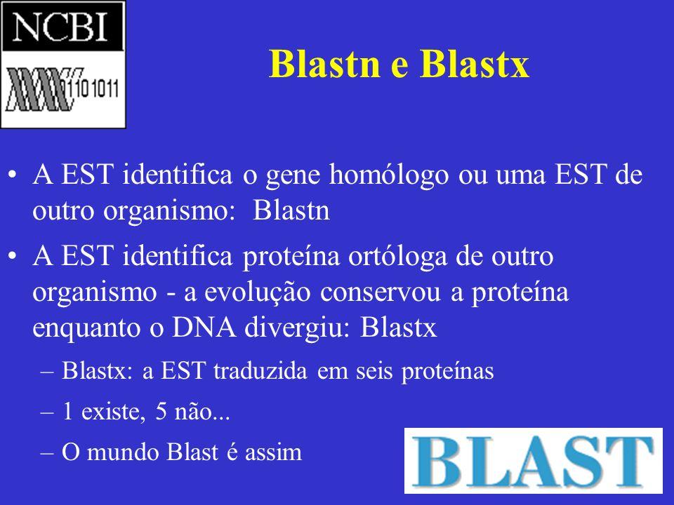 Blastn e Blastx A EST identifica o gene homólogo ou uma EST de outro organismo: Blastn A EST identifica proteína ortóloga de outro organismo - a evolu