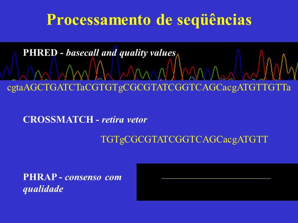 Processamento de seqüências cgtaAGCTGATCTaCGTGTgCGCGTATCGGTCAGCacgATGTTGTTa PHRED - basecall and quality values PHRAP - consenso com qualidade CROSSMA
