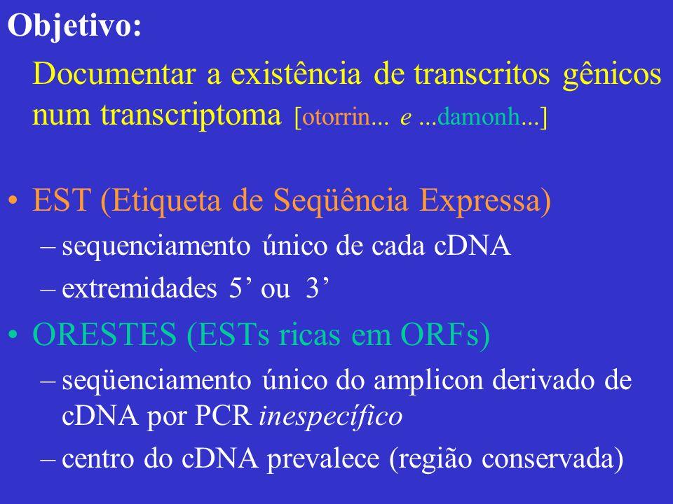 Um mRNA & suas ESTs (A) 20 0 (T) 18 cDNA (fita -) AUG (A) 18 cDNA (fita +) (A) 20 0 (T) 18 cDNA (fita -) AUG (A) 18 cDNA (fita +) ATG ATCATGACTTACGGGCGCGCGAT GGCGCGCGATATCC A A A T T T A T T A T C C 3EST 5EST A A A T T T A T T A T C C A T C T A C G