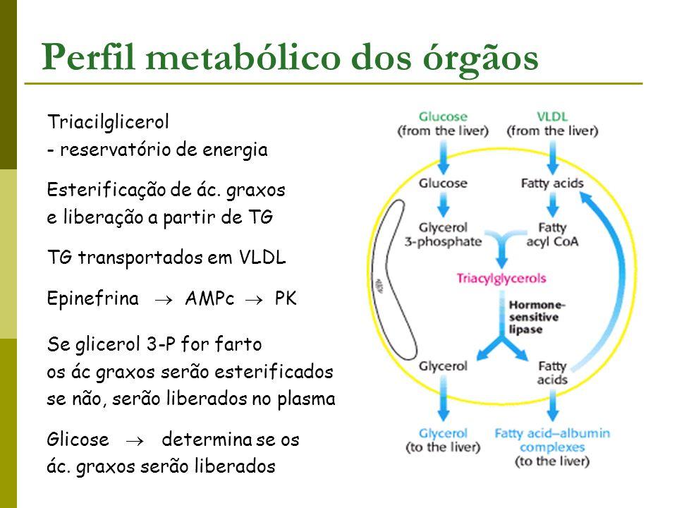 Perfil metabólico dos órgãos Triacilglicerol - reservatório de energia Esterificação de ác. graxos e liberação a partir de TG TG transportados em VLDL
