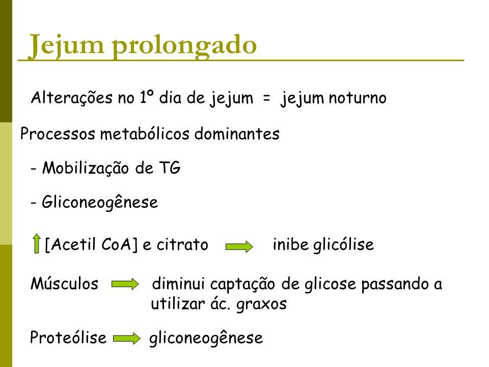 Jejum prolongado Alterações no 1º dia de jejum = jejum noturno Processos metabólicos dominantes - Mobilização de TG - Gliconeogênese [Acetil CoA] e ci