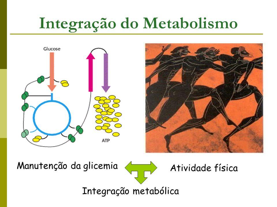 Catabolismo gerar ATP, poder redutor e elementos de construção para a biossíntese ATP fonte de energia - contração muscular - transporte ativo - amplificação de sinais - biossíntes - Gerado pela oxidação de moléculas energéticas AcetilCoA CK Cadeia respiratória ATP NADPH doador de elétrons nas biossínteses Interligação das vias metabólicas