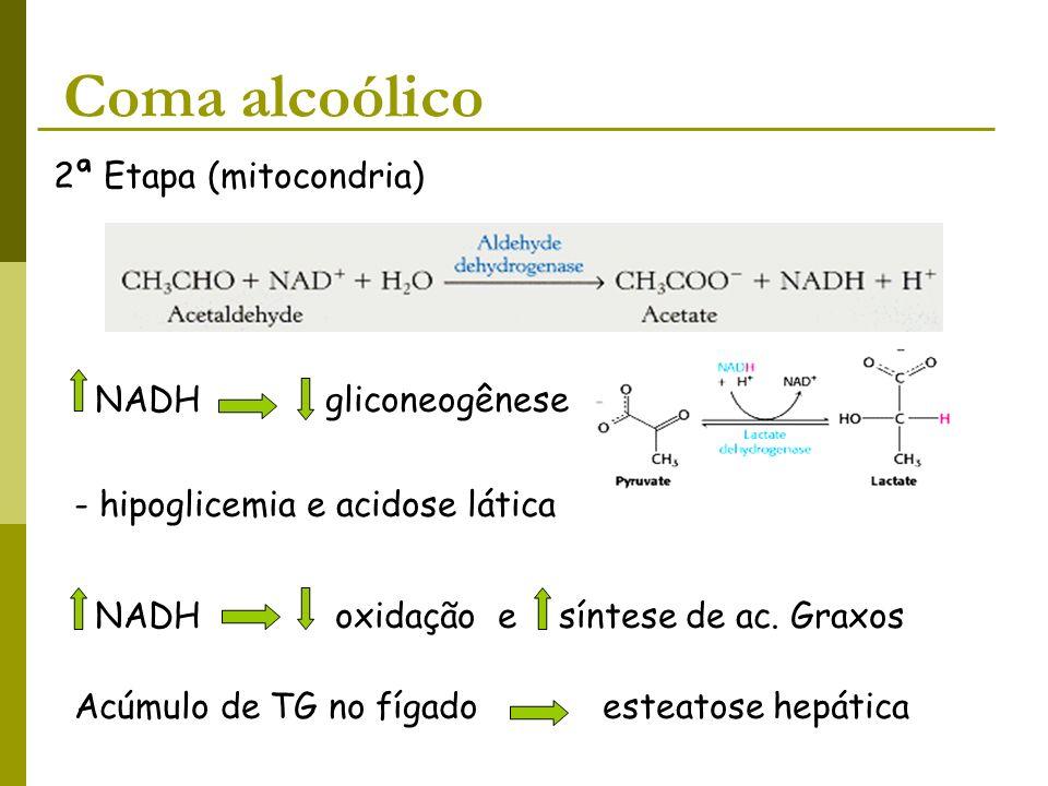 Coma alcoólico 2ª Etapa (mitocondria) NADH gliconeogênese - hipoglicemia e acidose lática NADH oxidação e síntese de ac. Graxos Acúmulo de TG no fígad