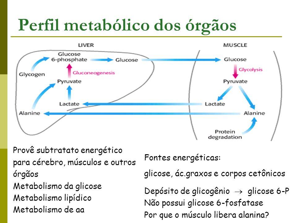Fontes energéticas: glicose, ác.graxos e corpos cetônicos Depósito de glicogênio glicose 6-P Não possui glicose 6-fosfatase Por que o músculo libera a