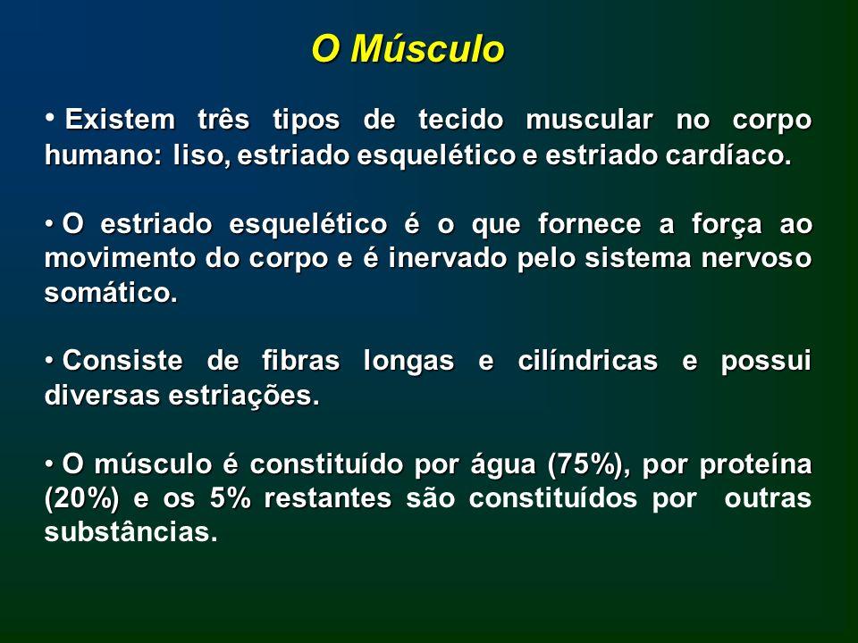 A necessidade de proteínas para atletas é semelhante para indivíduos sedentários, especialmente se o balanço energético é adequado.