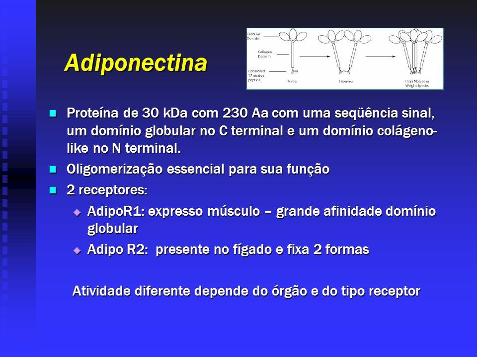 Adiponectina Proteína de 30 kDa com 230 Aa com uma seqüência sinal, um domínio globular no C terminal e um domínio colágeno- like no N terminal. Prote
