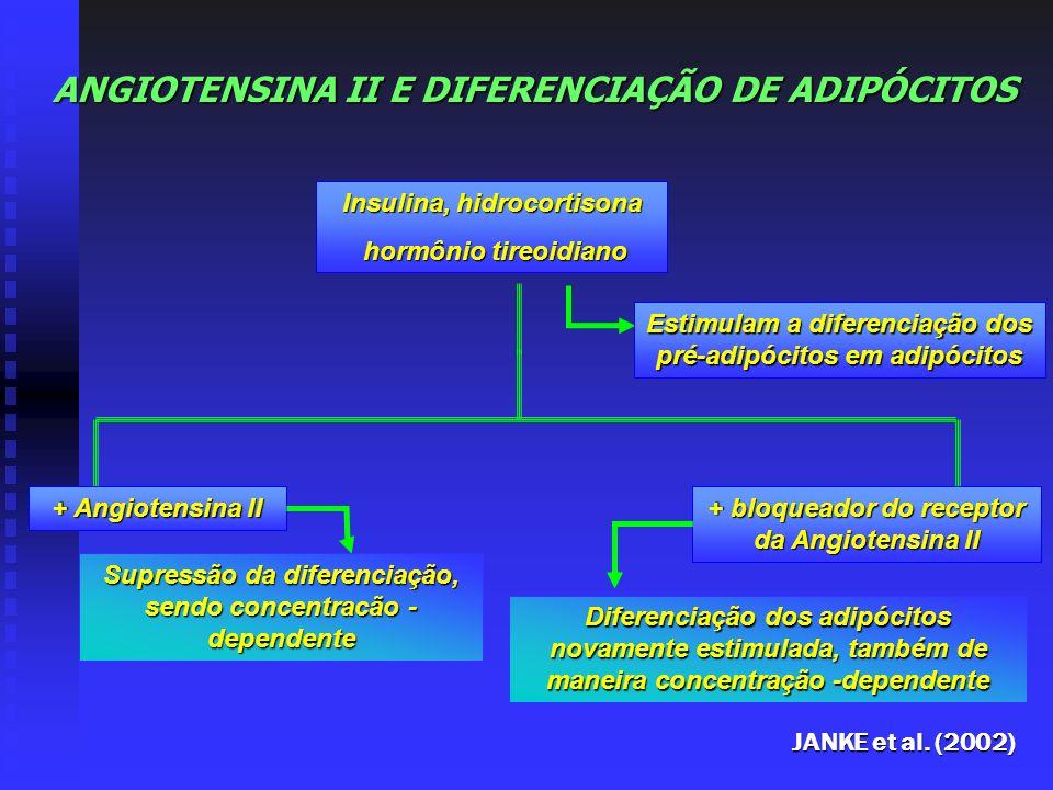 ANGIOTENSINA II E DIFERENCIAÇÃO DE ADIPÓCITOS Insulina, hidrocortisona hormônio tireoidiano hormônio tireoidiano Estimulam a diferenciação dos pré-adi