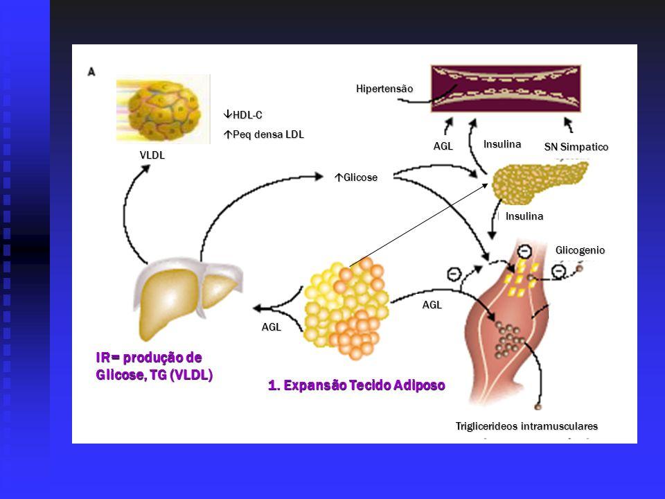 HDL-C HDL-C Peq densa LDL Peq densa LDL Glicose Glicose Hipertensão AGL Insulina SN Simpatico Insulina Glicogenio AGL AGL VLDL Triglicerideos intramus