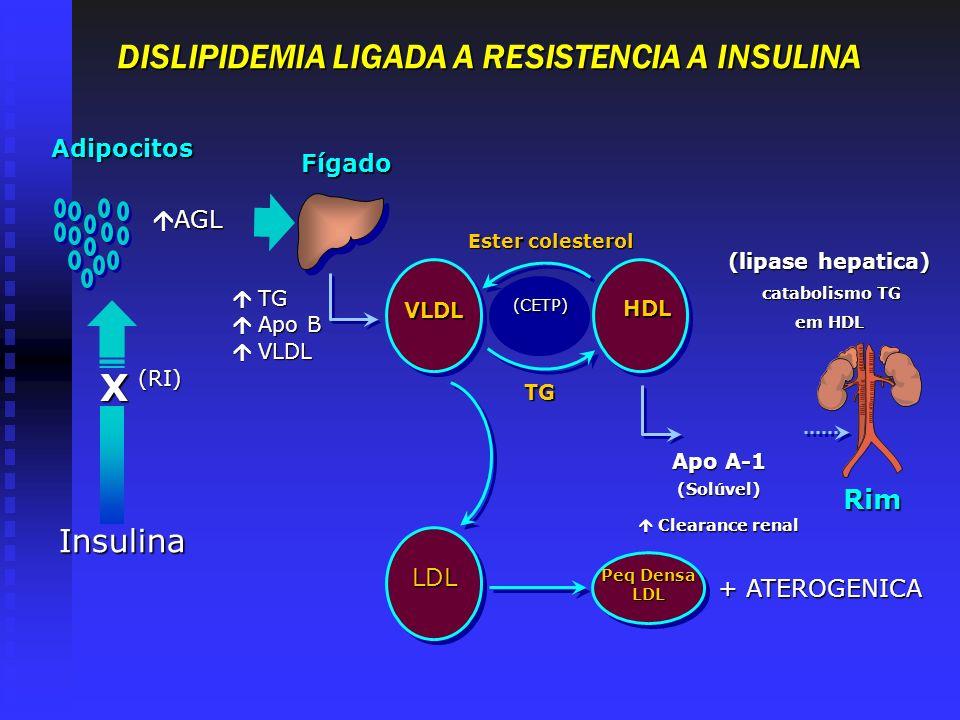 Peq Densa LDL LDL DISLIPIDEMIA LIGADA A RESISTENCIA A INSULINA Rim (CETP) Ester colesterol VLD L VLD L HDL TG Apo A-1 (Solúvel) Clearance renal Cleara