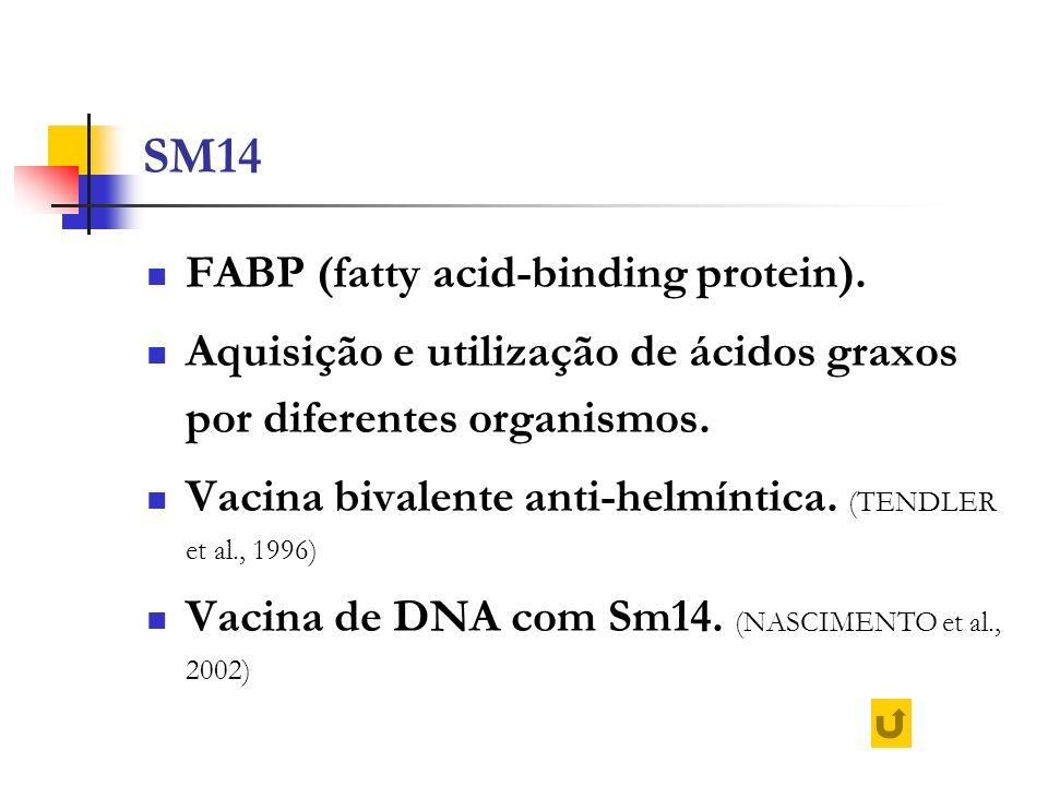 SM14 FABP (fatty acid-binding protein). Aquisição e utilização de ácidos graxos por diferentes organismos. Vacina bivalente anti-helmíntica. (TENDLER
