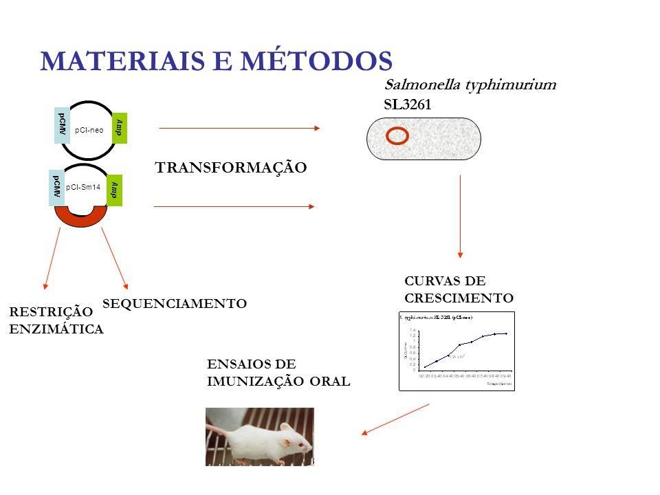 MATERIAIS E MÉTODOS pCMV pCI-Sm14 pCI-neo Amp RESTRIÇÃO ENZIMÁTICA SEQUENCIAMENTO TRANSFORMAÇÃO Salmonella typhimurium SL3261 CURVAS DE CRESCIMENTO EN