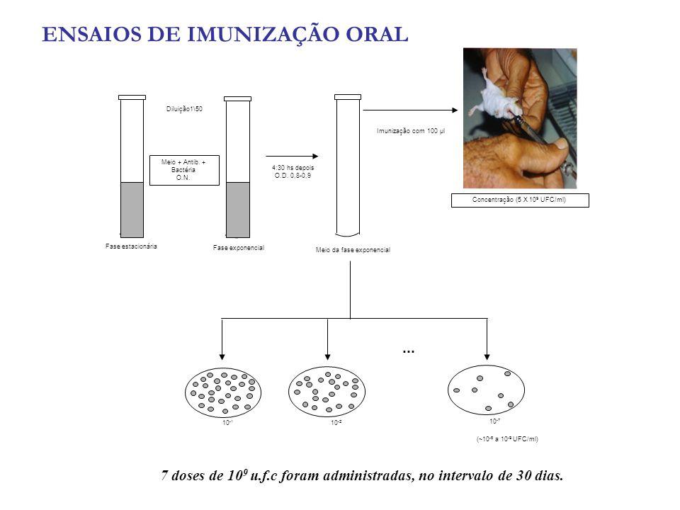 7 doses de 10 9 u.f.c foram administradas, no intervalo de 30 dias. 10 -1 10 -2 10 -7 Meio + Antib. + Bactéria O.N. Diluição1\50 Fase estacionária Fas
