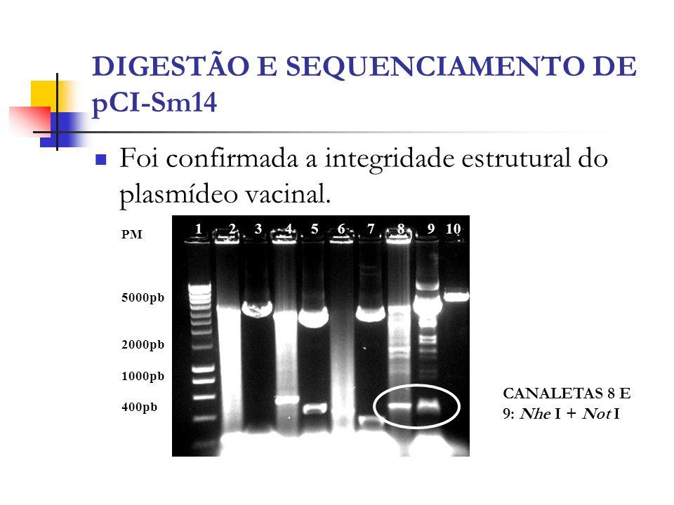 DIGESTÃO E SEQUENCIAMENTO DE pCI-Sm14 Foi confirmada a integridade estrutural do plasmídeo vacinal. 1 2 3 4 5 6 7 8 9 10 PM 5000pb 2000pb 1000pb 400pb
