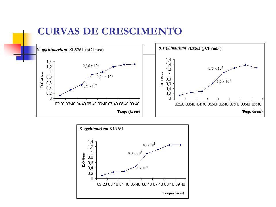 CURVAS DE CRESCIMENTO 5,54 x 10 8 2,36 x 10 9 1,6 x 10 5 4,75 x 10 5 6 x 10 8 8,3 x 10 8 8,9 x 10 8