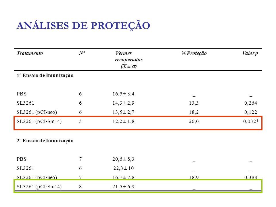ANÁLISES DE PROTEÇÃO TratamentoNºVermes recuperados (X ± ) % ProteçãoValor p 1º Ensaio de Imunização PBS616,5 ± 3,4__ SL3261614,3 ± 2,913,30,264 SL326