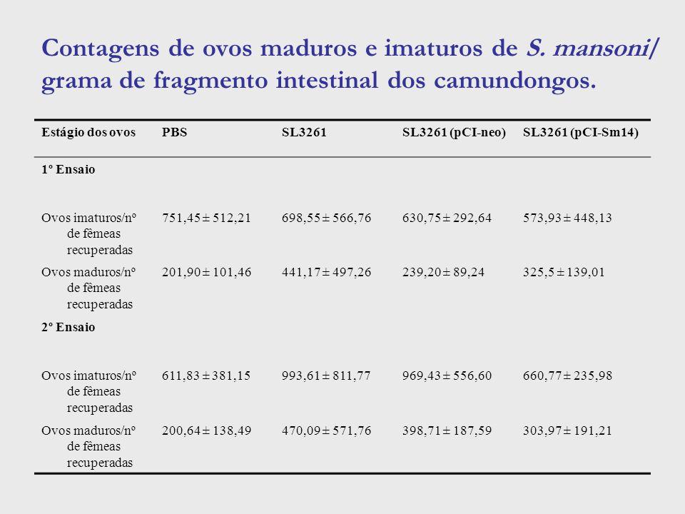 Contagens de ovos maduros e imaturos de S. mansoni/ grama de fragmento intestinal dos camundongos. Estágio dos ovosPBSSL3261SL3261 (pCI-neo)SL3261 (pC
