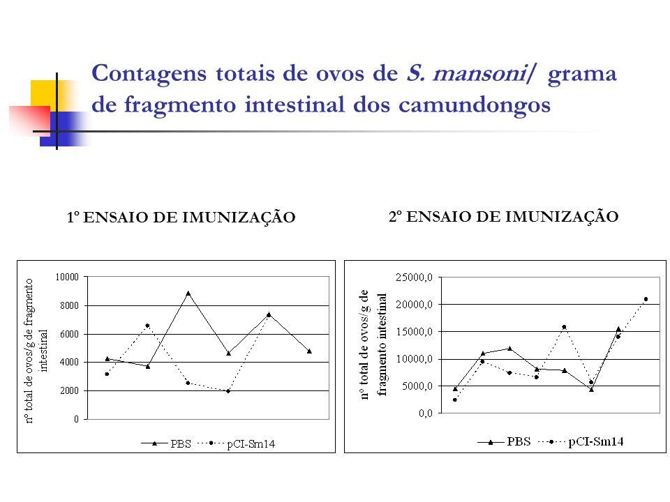 Contagens totais de ovos de S. mansoni/ grama de fragmento intestinal dos camundongos 1º ENSAIO DE IMUNIZAÇÃO 2º ENSAIO DE IMUNIZAÇÃO