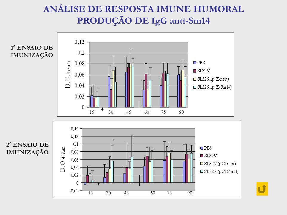ANÁLISE DE RESPOSTA IMUNE HUMORAL PRODUÇÃO DE IgG anti-Sm14 15 30 45 60 75 90 * 1º ENSAIO DE IMUNIZAÇÃO 2º ENSAIO DE IMUNIZAÇÃO