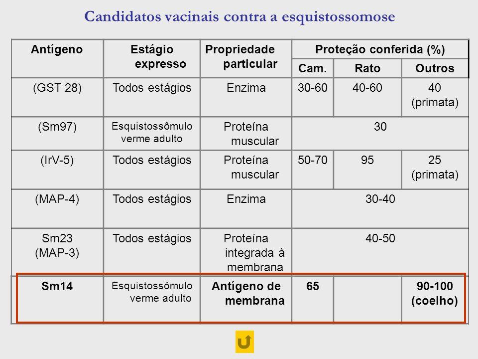 Candidatos vacinais contra a esquistossomose AntígenoEstágio expresso Propriedade particular Proteção conferida (%) Cam.RatoOutros (GST 28)Todos estág