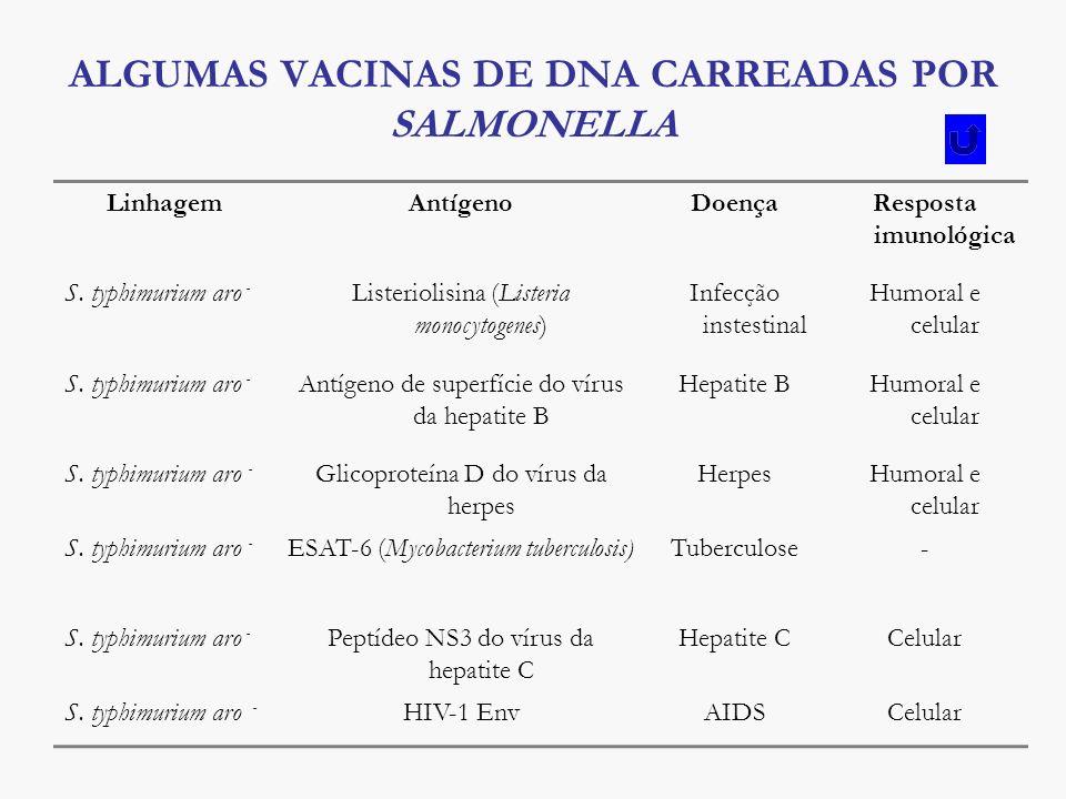 ALGUMAS VACINAS DE DNA CARREADAS POR SALMONELLA LinhagemAntígenoDoençaResposta imunológica S. typhimurium aro - Listeriolisina (Listeria monocytogenes