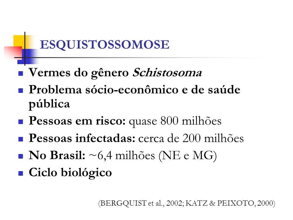 ESQUISTOSSOMOSE Vermes do gênero Schistosoma Problema sócio-econômico e de saúde pública Pessoas em risco: quase 800 milhões Pessoas infectadas: cerca