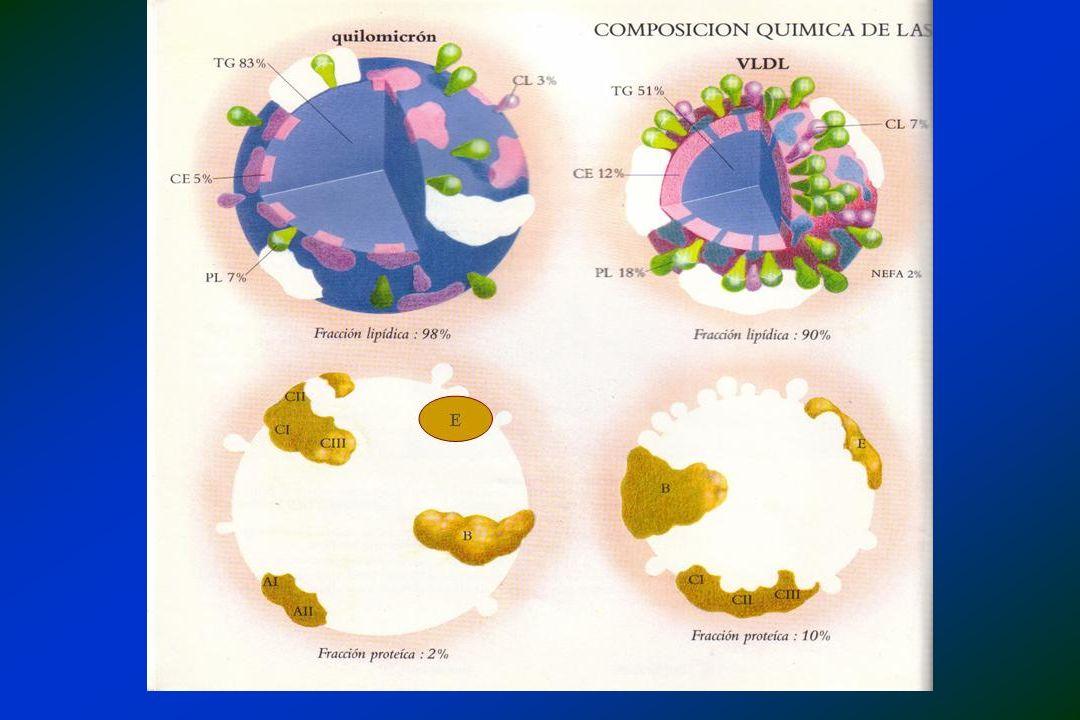 Efeitos dos AG em lipoproteinas Todos os AG aumentam HDL em relação a CH SAT aumentam LDL e HDL SAT aumentam LDL e HDL PI em relação a SAT = LDL e HDL PI em relação a SAT = LDL e HDL MI em relação a SAT = LDL e HDL MI em relação a SAT = LDL e HDL PORÉM, DEVEM SER MANTIDOS DENTRO DAS PROPORÇÕES RECOMENDADAS