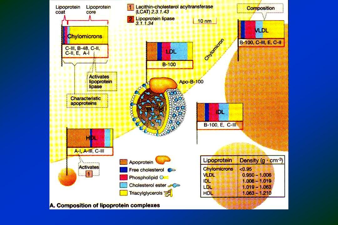 EFEITO DE ADJUNTOS ALIMENTARES Mudança estilo de vida em pacientes LDL-C = 160 Walden CE et al.