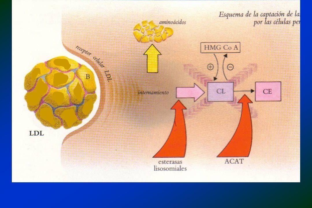 EFEITOS NA TRIGLICERIDEMIA - TG em VLDL - secreção de VLDL - clearance de Qm e VLDL (?) EFEITOS NA COLESTEROLEMIA - Nenhum efeito em indivíduos normais - LDL e LDLc em pacientes hipertrigliceridêmicos - ox LDL (EPA e DHA) -3 -3