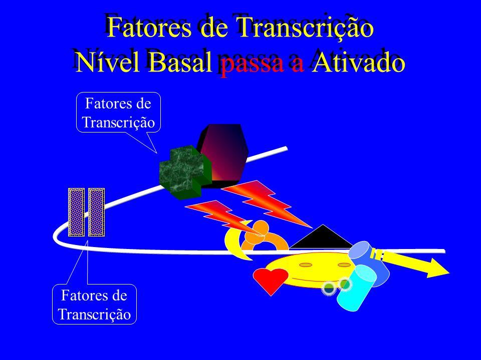 Fatores de Transcrição Nível Basal passa a Ativado Fatores de Transcrição Fatores de Transcrição