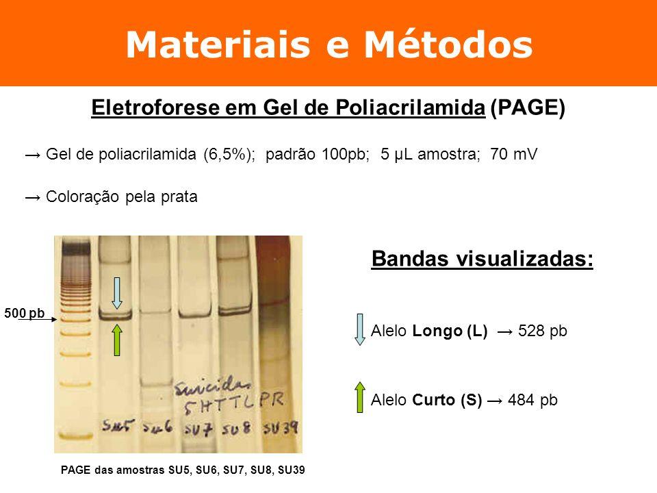 Materiais e Métodos Eletroforese em Gel de Poliacrilamida (PAGE) Gel de poliacrilamida (6,5%); padrão 100pb; 5 µL amostra; 70 mV Coloração pela prata