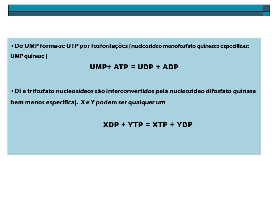 Do UMP forma-se UTP por fosforilações (nucleosídeo monofosfato quinases específicas: UMP quinase ) UMP+ ATP = UDP + ADP Di e trifosfato nucleosídeos s